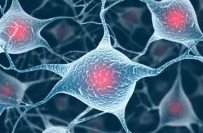 Mindfulness Para Conectar Cuerpo Y Mente