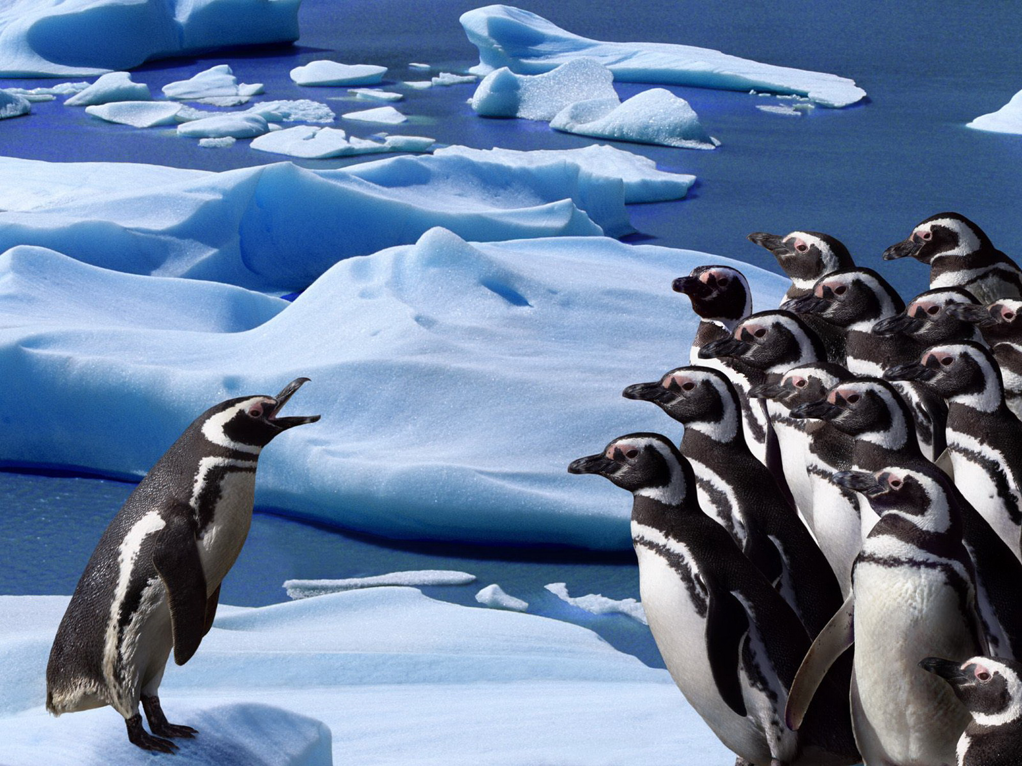 Penguins Animals Wallpapers HD