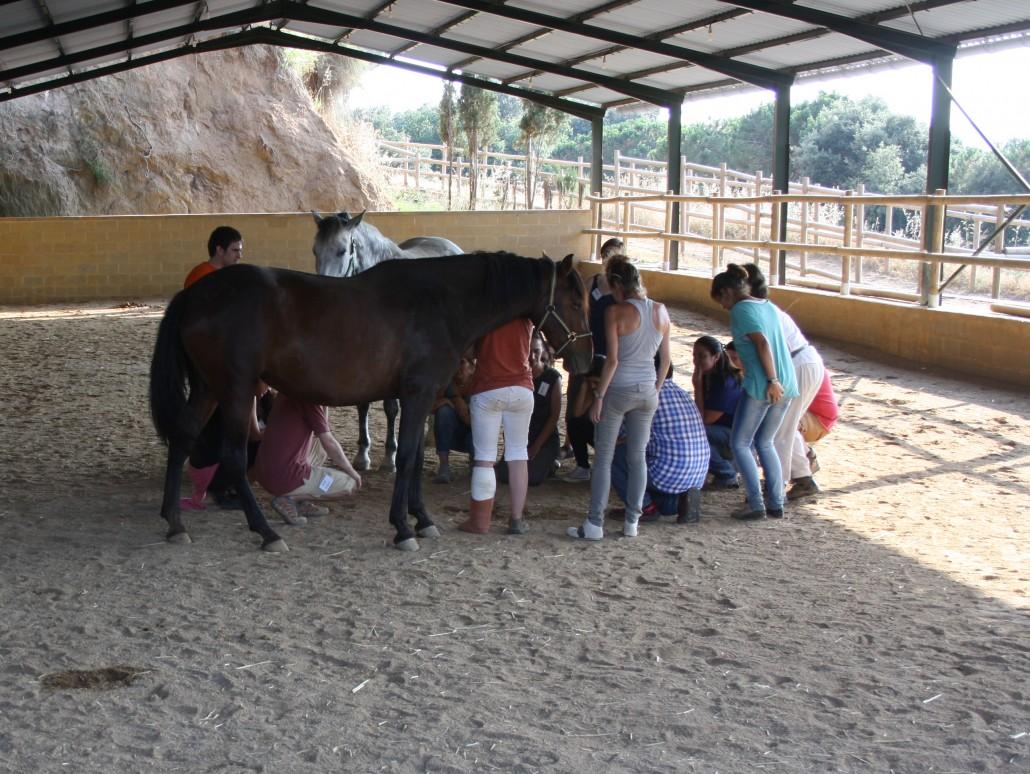 Coaching Con Caballos: Mejora Tu Liderazgo